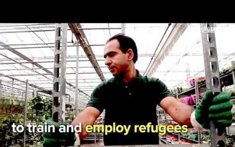 European businesses are stepping up to train and employ refugees