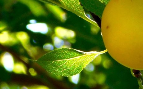 How to Avoid Complacency in the Workplace: The Low Hanging Fruit