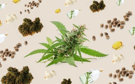 Which Cannabis Products Will Be Legal In Canada On Oct. 17 (And Beyond)?