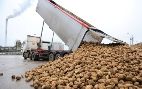 British Sugar boss hails farmers' remarkable resilience in testing times