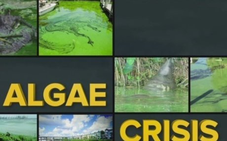Gov. Rick Scott's proposed budget addresses algae issues