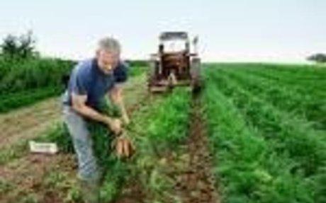 farming - Google Search