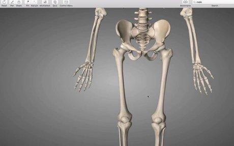 lower Extremity bones