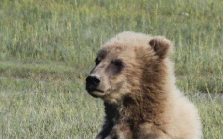 Bear Viewing Alaska by Alaskan Gamefisher