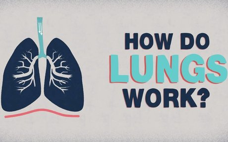 What do the lungs do? - Emma Bryce