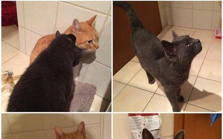 Macskaárvaház Alapítvány