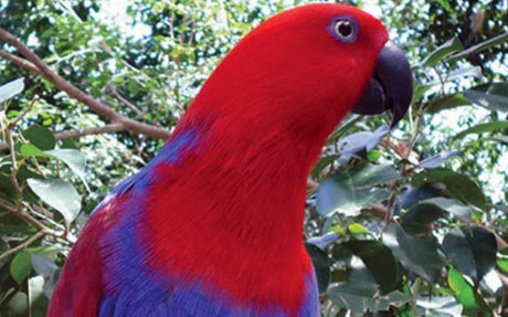 Wildlife of Australia's Cloud Forest