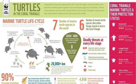Statistic: The Life Cycle of a Turtle