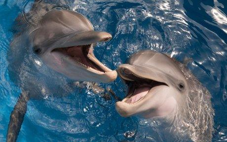 Clearwater Marine Aquarium Live WebCams