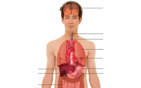 - A2.1 Menschen Lektion 8 Organe