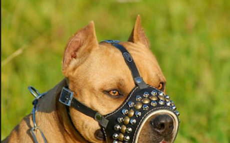 Positives of Bsl / Positives of breed specific laws – Arguments for breed specific laws BS