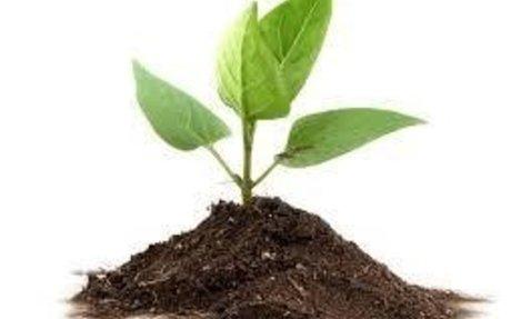 Plants Make You Happy