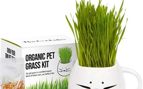 Amazon.com: Organic cat grass growing kit with organic seed mix, organic soil and cat plan