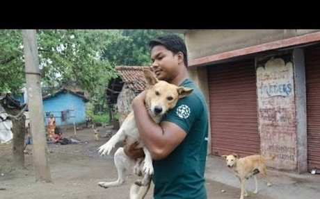 NGO for street dogs