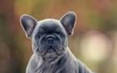 I have a french bulldog named Buckeye.