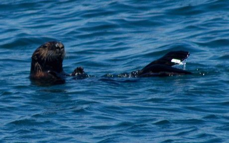 10 Amazing Facts About Sea Otters