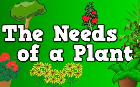 The Needs of a Plant (song for kids about 5 things plants need to live)