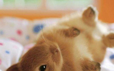 Show Me a Bunny!