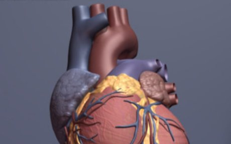 Research reveals new insights into why the heart does not repair itself