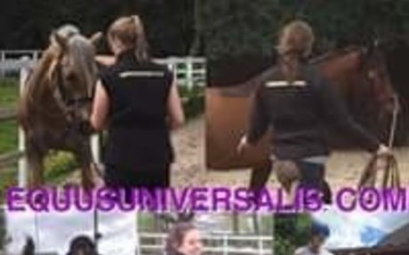 Equus Universalis Instructor and trainer School