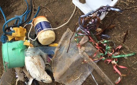 Balloon ribbons collected at Phillip Island pose a deadly threat to wildlife