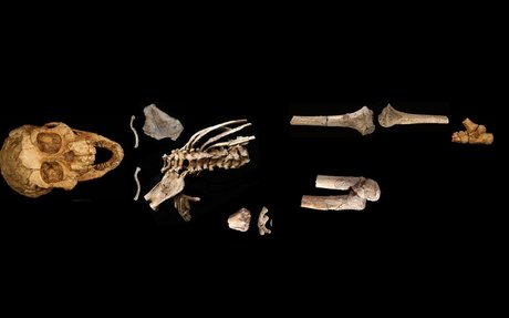 Prehistoric two-year-old could grip tree branches with her feet