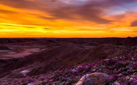 Why California Deserts Are Experiencing a 'Super Bloom'