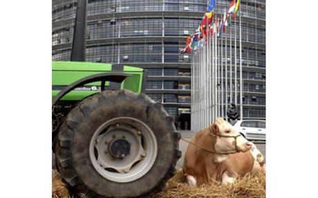 CAP Transitional regulation: Euro Parliament discussion on compromise amendments