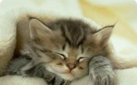 Macska imádók blogja