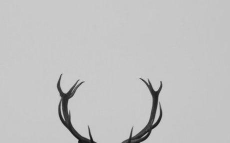 Photograph of A Deer
