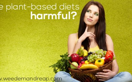 Are Plant-Based Diets Harmful? - Weed 'em & Reap