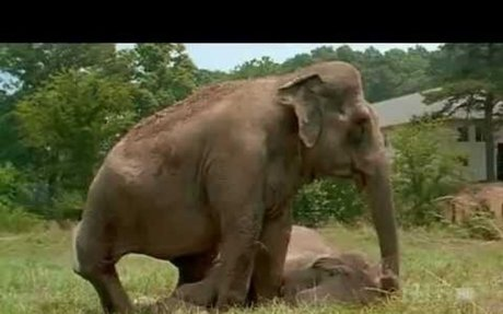 Shirley and Jenny: Two Elephants Reunited After More Than 20 Years