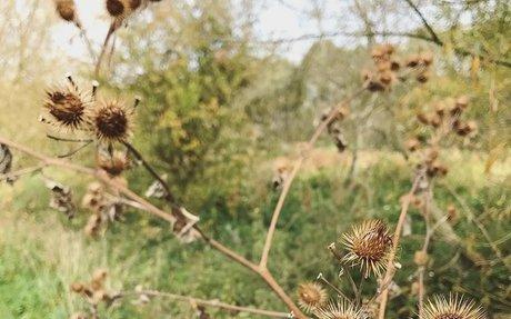 New Blog Post!: An Autumn Walk