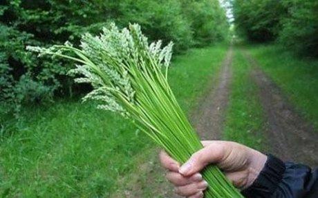 NUTRITION/FOOD (edible plants)