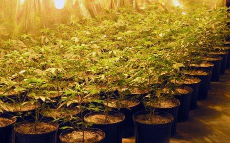 Manitoba Looking for Suppliers & Retailers of Marijuana - MyToba.ca News