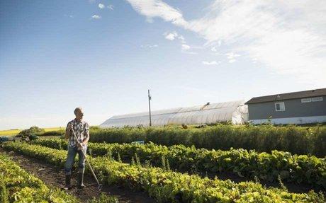 Canada Makes Marijuana Farmers Eligible for Government Agriculture Programs - GFarma.news