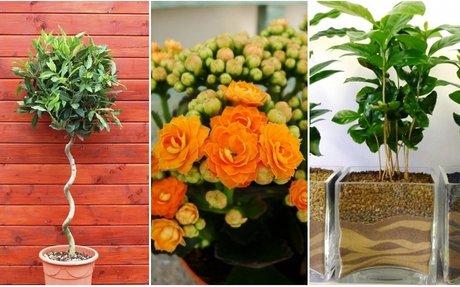 10 szobanövény, ami tökéletes mikroklímát alakít ki otthon