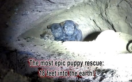 #1 - A super heroic rescue by hope for paws