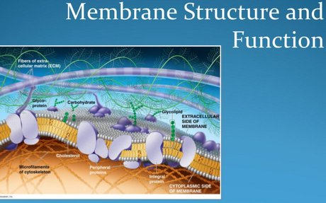 Ch. 7 Cell Membrane & Water Potential
