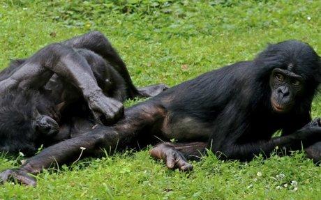Les singes seraient davantage attirés par les enfoirés