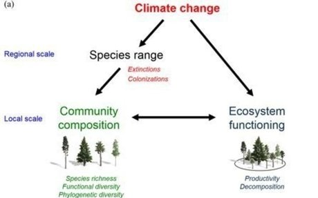 Long-term response of forest productivity to climate change and change in tree species