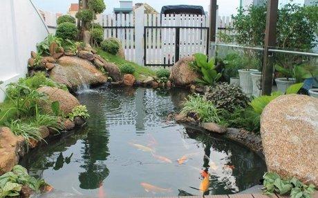 #1 Thi công, thiết kế hồ nuôi cá koi Nhật chuyên nghiệp