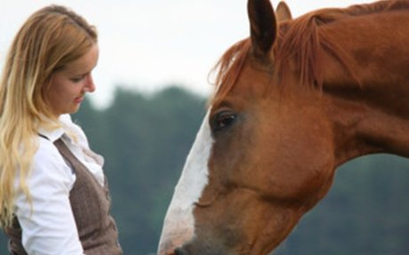 Horse Care:  Healthier Horse Treats With Polyphenols