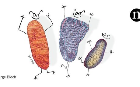 How secret conversations inside cells are transforming biology