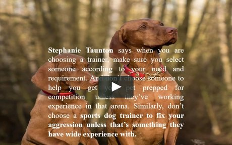 What to look for When Hiring a Good Dog Trainer - Stephanie Taunton
