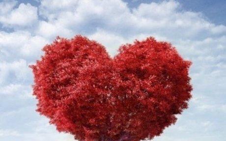 Vital Health - Dia Internacional do Ritmo Cardíaco: Como marcha o seu coração?
