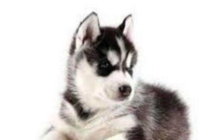 Mi Animal favorito es el perro