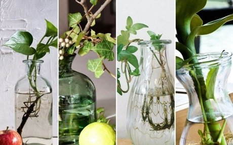 Így nevelj gyönyörű szobanövényeket egy üveg vízben!