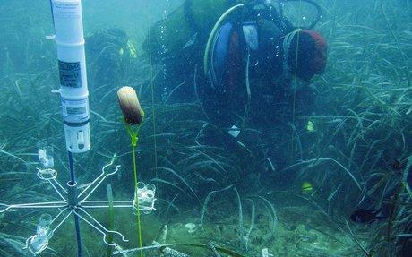 Serveis Ambientals Marins-SUBMON-