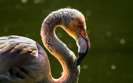 Zoo Society's lengthy list of animal adaptations